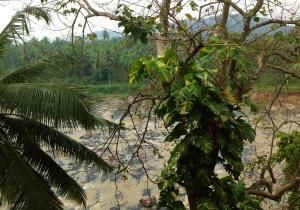 Maoya River